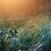 Beautiful spider web — Stock Photo