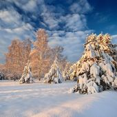 Winter landscape at sunset — Stock Photo