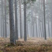 A mystical forest with fog — Stock Photo