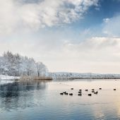 Mooie winter lake — Stockfoto