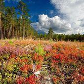 Northren forest — Stock Photo