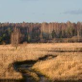 Field in Autumn — Stock Photo
