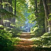 Road in a beautiful forest — Stock Photo