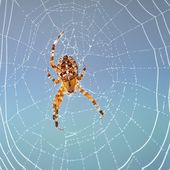 Spider sitting in his web in the morning — Stock Photo