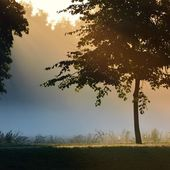 Mystical tree silhouette in fog — Stock Photo
