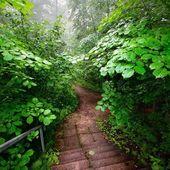 Staiway en bosque — Foto de Stock