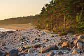 Baltic sea shore — Stock Photo
