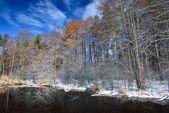 冬の小さな森の湖 — ストック写真
