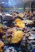 海洋水族館、動物園で展示 — ストック写真