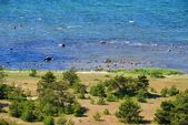 Baltic sea shore — Stock Photo