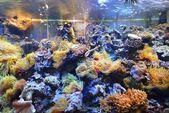 Acuario marino en exhibición en un zoológico — Foto de Stock
