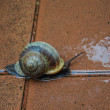 Stock Photo: Snail runing