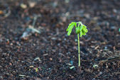 Small plant on dead soil — Stock Photo