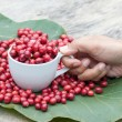 Stock Photo: Coffee berry in cup