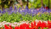 Bellissimi fiori colorati — Foto Stock