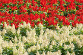 Beautiful colorful flowers — Стоковое фото