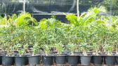 Plant nurseries — Stock Photo