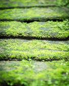 Grüne Moos auf Walker Straße — Stockfoto