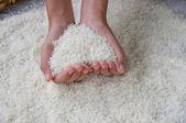 Thai jasmine rice — Stock Photo