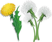 Cute dandelions — Stock Vector