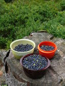 Blueberry — ストック写真