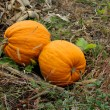 Collected on the pumpkin — Stock Photo