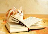 Gatito rojo y blanco Mira atentamente al lado — Foto de Stock