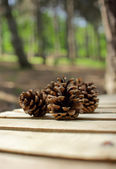 Cones on a park bench — Stockfoto