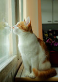 Kitten is watching with interest the window — Stock Photo