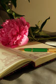 Open weekly pen and peony — Stockfoto