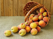 Peaches, spill out of the basket on the table — Foto Stock