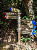 Ormandaki tabela — Stok fotoğraf
