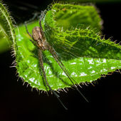 Wolf Spider on green leaf — Stock Photo