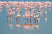 Flamingi — Zdjęcie stockowe