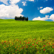 Tuscan Landscape — Stock Photo #32605283