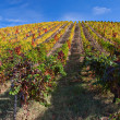Stock Photo: Douro Vineyards