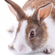Bunny — Stock Photo #32609247