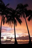 Tropical Sunset — Stockfoto