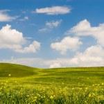 Flowered Tuscan Landscape — Stock Photo