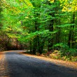 Autumn Road — Stock Photo #33119319