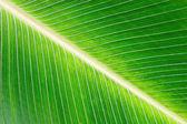 Leaf Detail — Stock Photo