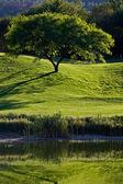 Tree in Golf Field — Stock Photo