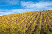 Douro Vineyards — Stock Photo