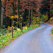 Stock Photo: Road in the Woods