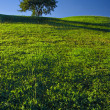 Tree on Grassland — Stock Photo