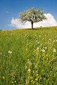 Drzewa kwitną — Zdjęcie stockowe