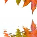 Autumn fall Leaves — Stock Photo #34895197