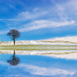 Lonely Tree with Reflection — Stock Photo