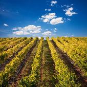 Winnice wina Porto w Portugalii — Zdjęcie stockowe