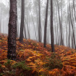 Foggy Forest — Stock Photo #35353849